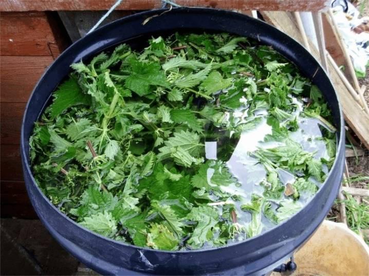 Настой крапивы для подкормки растений - запишите рецепт зеленого удобрения из крапивы. | красивый дом и сад