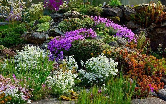 Альпийская горка — использование в ландшафте, подбор места и растений + 84 фото