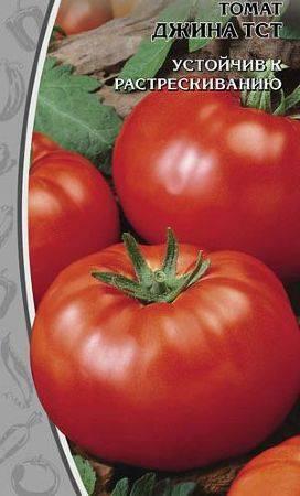 Томат джина: описание, характеристика, урожайность, фото и видео