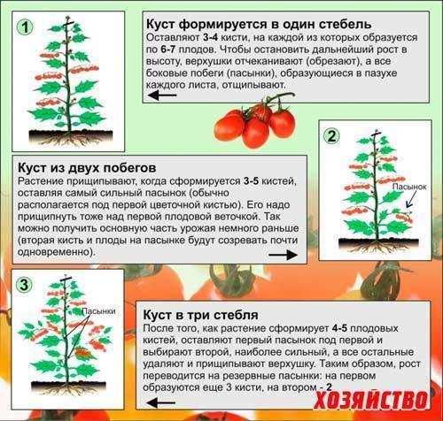 Формирование томатов – в теплице, открытом грунте, как правильно, в 1, 2, 3, 4 стебля, схема, видео