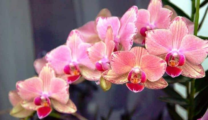Простые пересадка и уход за орхидеей в домашних условиях