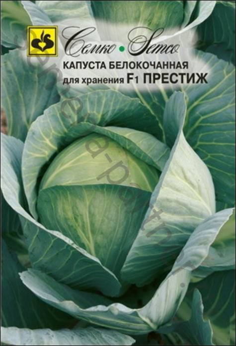 Капуста престиж: описание позднего сорта, особенности выращивания и ухода за гибридом