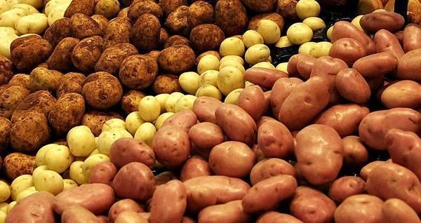 Сорта картофеля: названия с фото, описания и характеристики