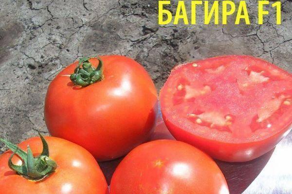 Томат багира — описание сорта, отзывы, урожайность
