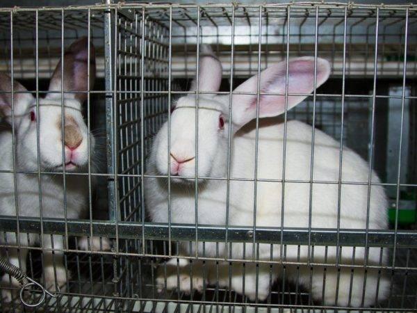 Как сделать клетку для кроликов своими руками: «многоэтажка» для ушастых питомцев