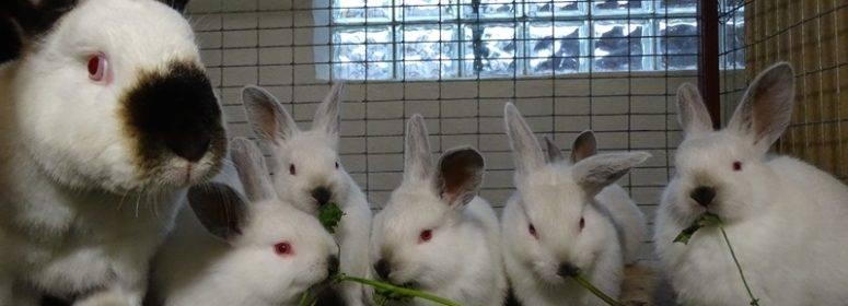 Можно ли давать кроликам крапиву: польза и вред, нормы кормления