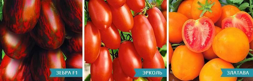 10 крупноплодных сортов томатов, сладкие для теплицы из поликарбоната и открытого грунта, самые крупноплодные и урожайные помидоры