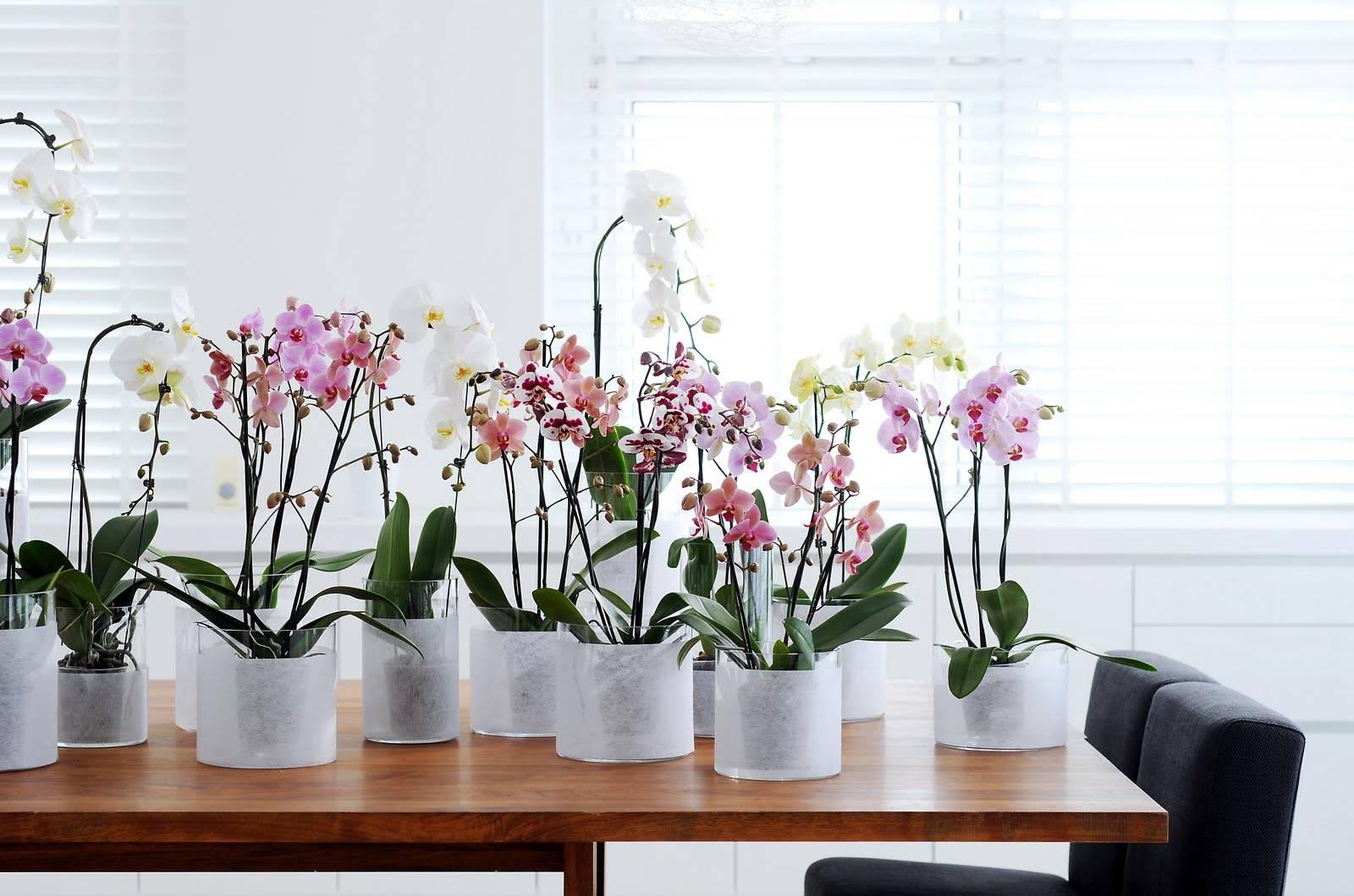 Как пересадить орхидею?