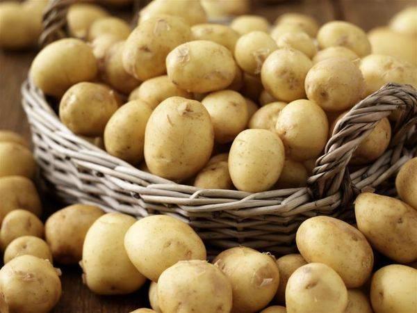 Самые рассыпчатые сорта картофеля на пюре, лучший картофель для жарки
