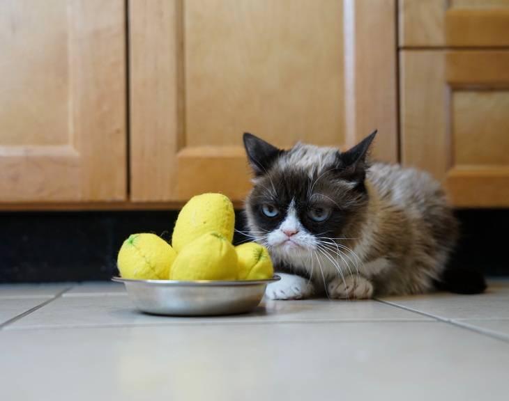 Какой запах отпугивает кошек: как их отпугнуть, чтобы не гадили, ароматами, которые животные не любят, отзывы, видео