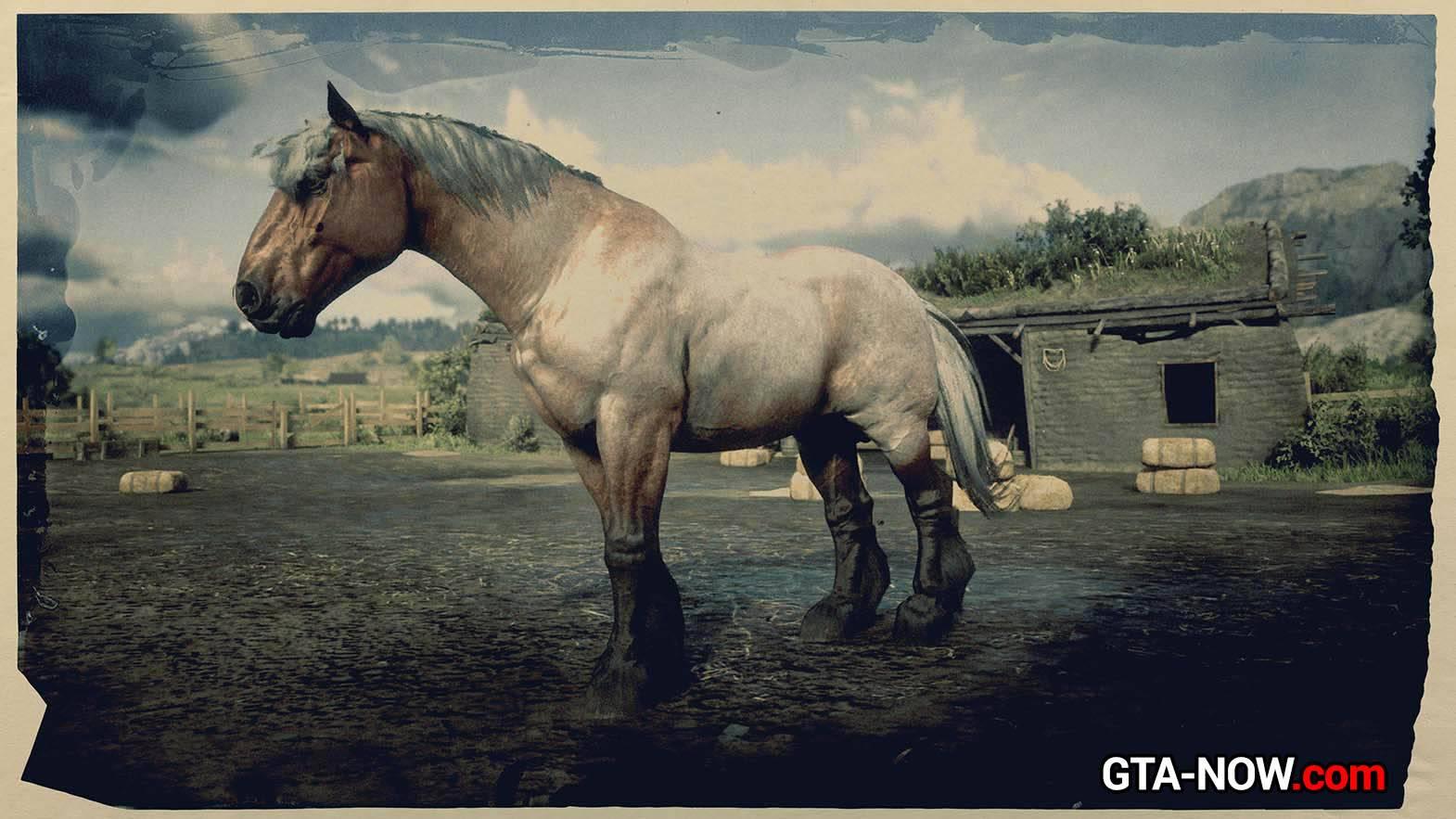 Арденская лошадь: описание породы, фото, характеристика
