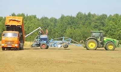 Сроки посева озимой пшеницы, когда сеять озимую пшеницу - пропозиция