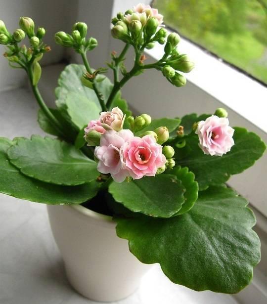 Цветы в горшках, которые подходят для офиса