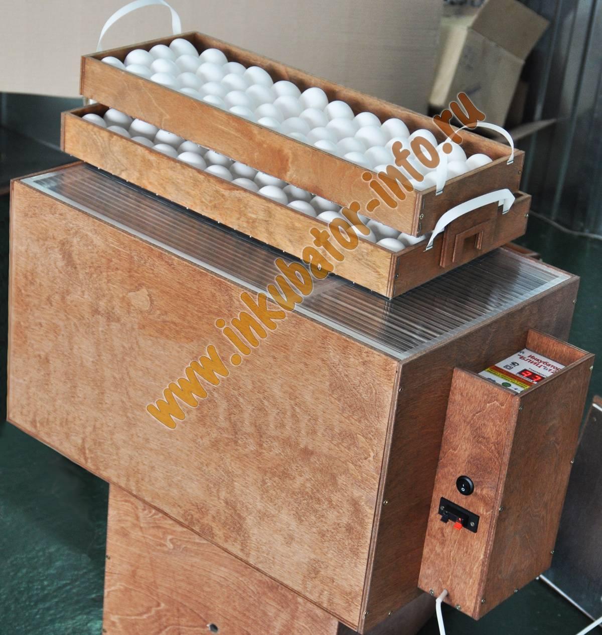Инкубация куриных яиц - 100 фото и описание технологии производства цыплят