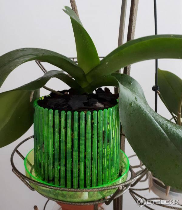 Горшки для орхидей (54 фото): какой горшок нужен для орхидей? каким он должен быть и как его выбрать? лучшие большие прозрачные стеклянные модели