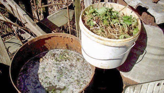 Дрожжи как удобрение для рассады как приготовить