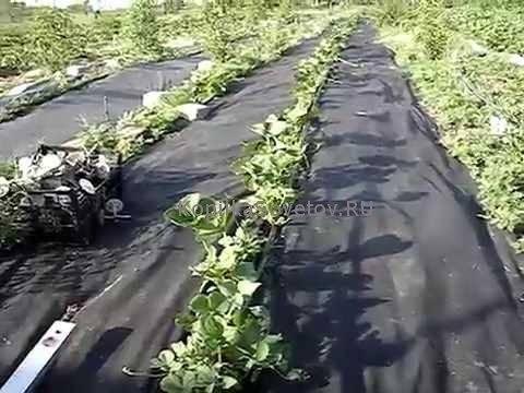 Агроткань: фото, видео, применение в садоводстве отличие от агроволокна