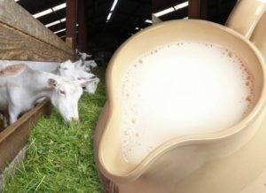 Польза овечьего молока