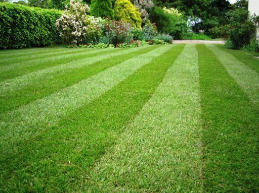 Когда сеять газонную траву: определение сроков (весна, лето, осень) + инструкция подготовки участка и посева газона