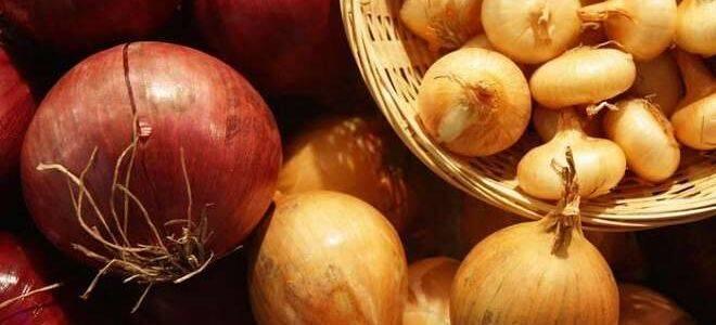 Как хранить лук в домашних условиях после сбора урожая