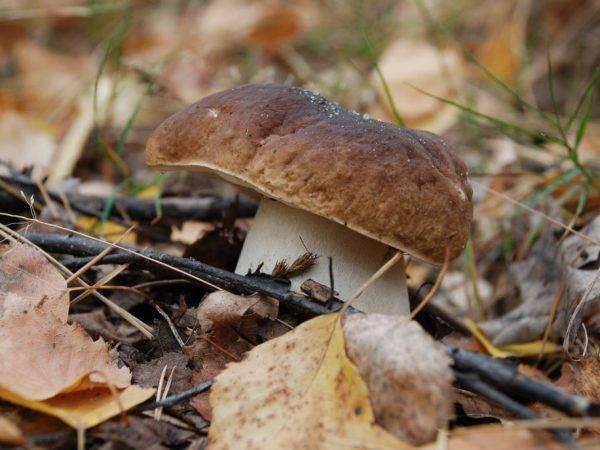 Грибные истории: как нынче по грибы ходят ::  новости