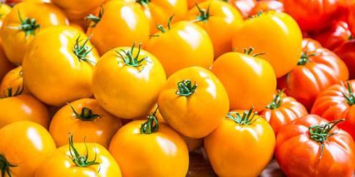 К чему женщине снятся красные помидоры: много, свежие, на кустах, соленые