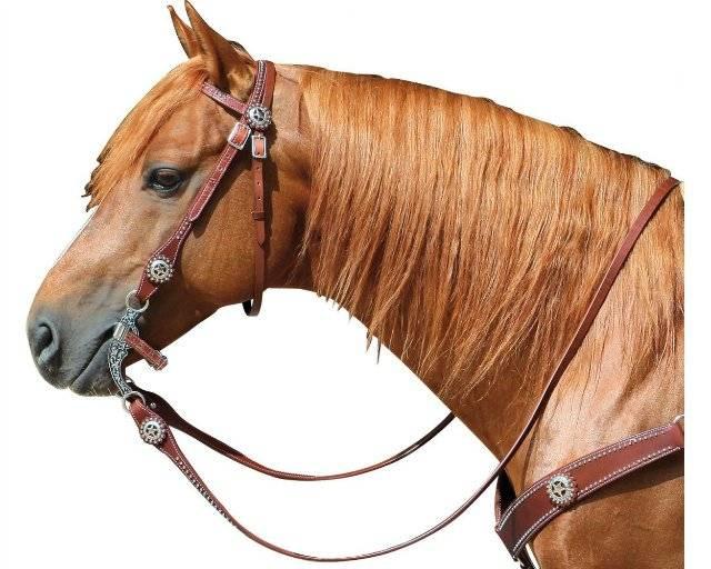 Недоуздок для лошади — виды и как сделать своими руками