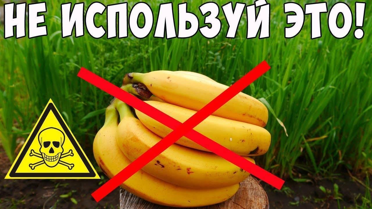 Удобрение из банановой кожуры, для комнатных растений: 7 проверенных рецептов, стимулирующих рост цветов