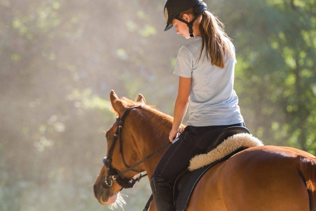 Запрягать лошадь: элементы упряжи, этапы процесса, виды запряжки