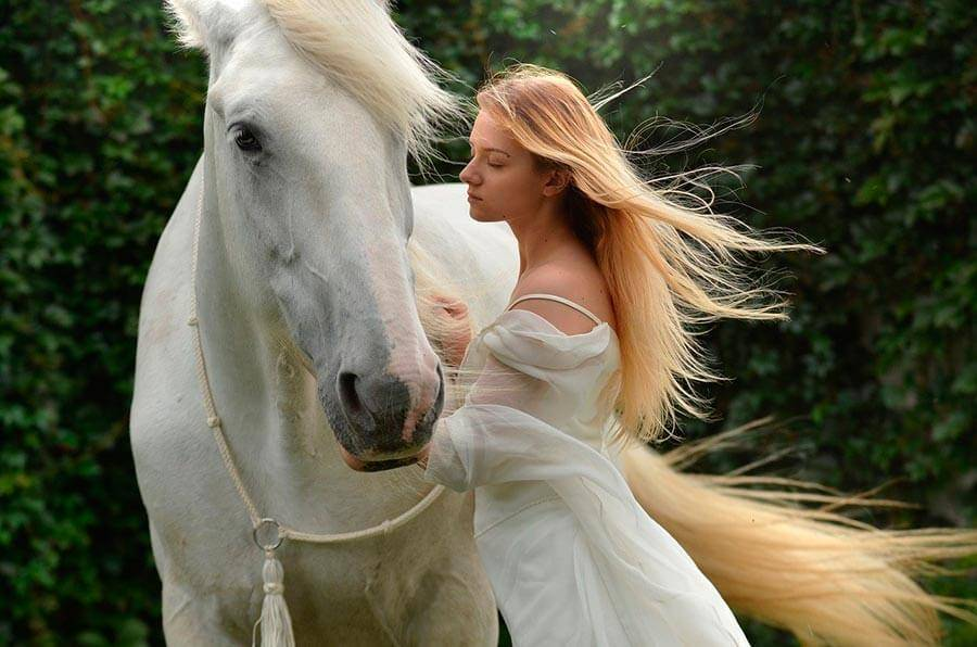 Сонник запрягать лошадь. к чему снится запрягать лошадь видеть во сне - сонник дома солнца