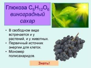 Экстракт кожицы винограда: польза для сосудов