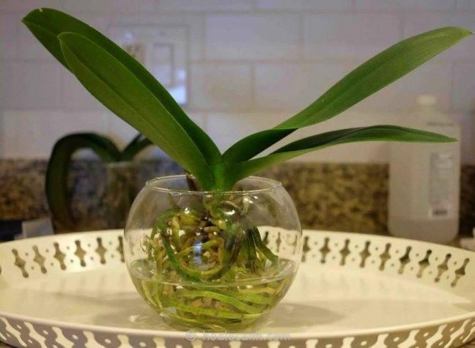 Уход за орхидеями после покупки и после цветения - 7 шагов для новичков с фото