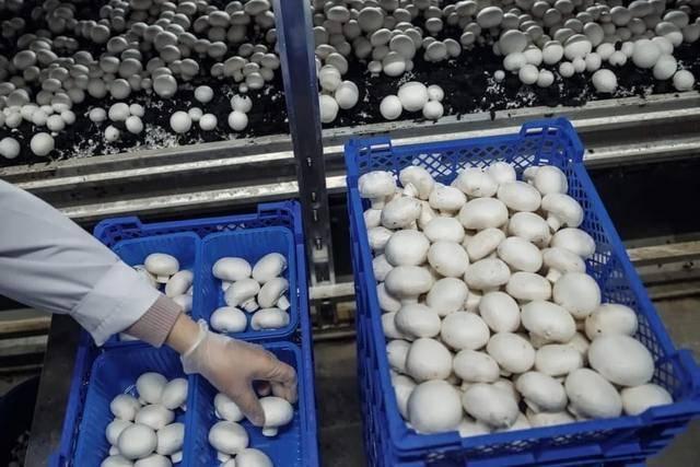 Выращивание грибов как бизнес: с чего начать, бизнес-план