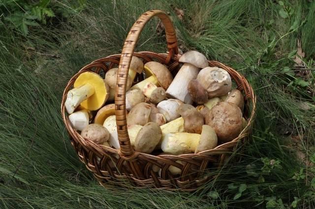 Где в томск р не растет белый гриб - новости города  - каталог статей - tomsk