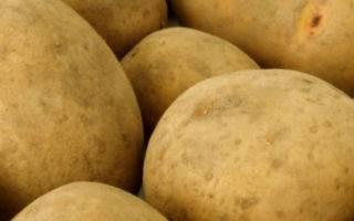"""Картофель """"каратоп"""": описание сорта, фото, отзывы"""