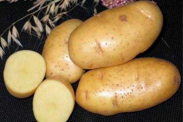 Картофель каратоп: описание сорта, фото, отзывы