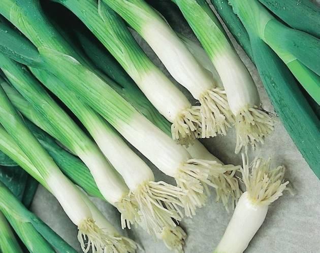 Лук батун: выращивание из семян, посев через рассаду