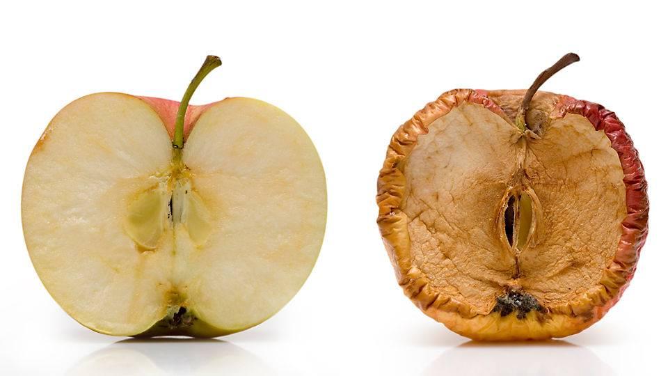 Диагноз по урожаю яблок: что случилось с яблоками? на supersadovnik.ru