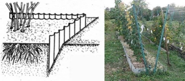 Как правильно посадить малину осенью: выбор схемы и расстояния, видео и фото