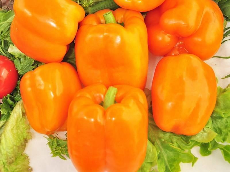 Урожайные сорта перцев сибирской селекции