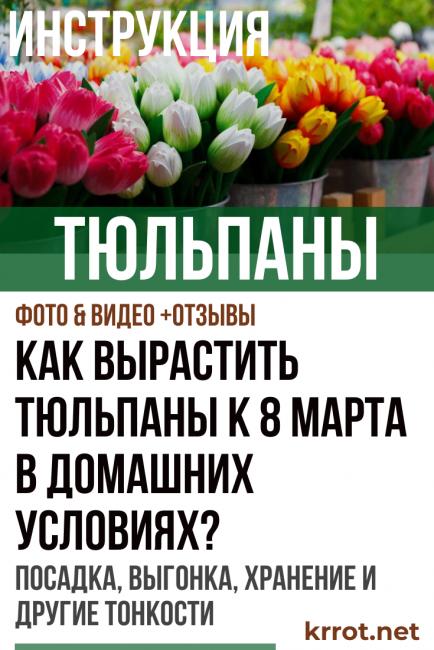 Как дольше сохранить букет тюльпанов в домашних условиях