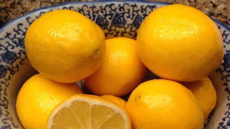 Лимон павловский: описание сорта и уход в домашних условиях