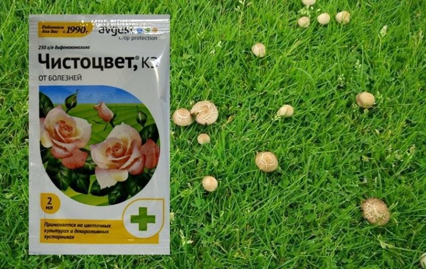 На газоне появились грибы как убрать? избавляемся от грибов на участке