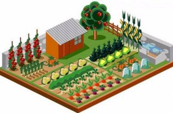 Тенелюбивые растения для огорода и теневыносливые овощи, фото и видео