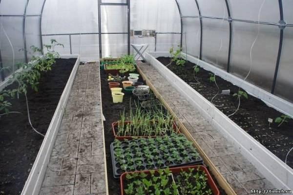 Можно ли сажать перец вместе или рядом с помидорами в одной теплице или открытом грунте