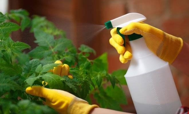Инсектицид калипсо: предназначение препарата, инструкция по применению