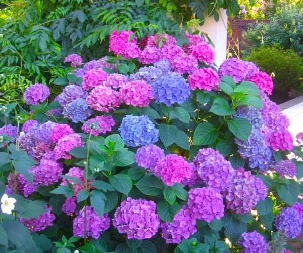Теневыносливые и тенелюбивые многолетние цветы для сада