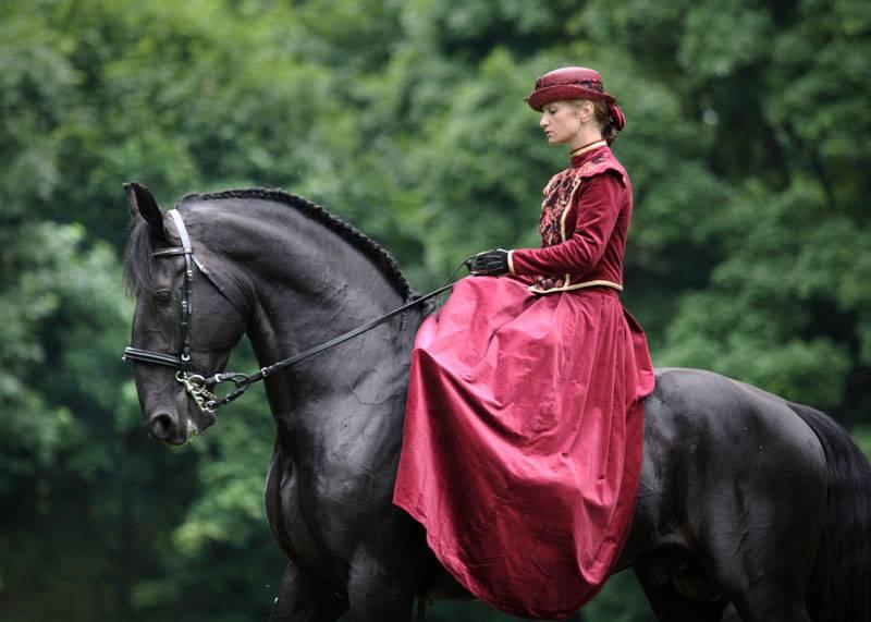 Фризская порода лошадей: история, описание, фото | мои лошадки