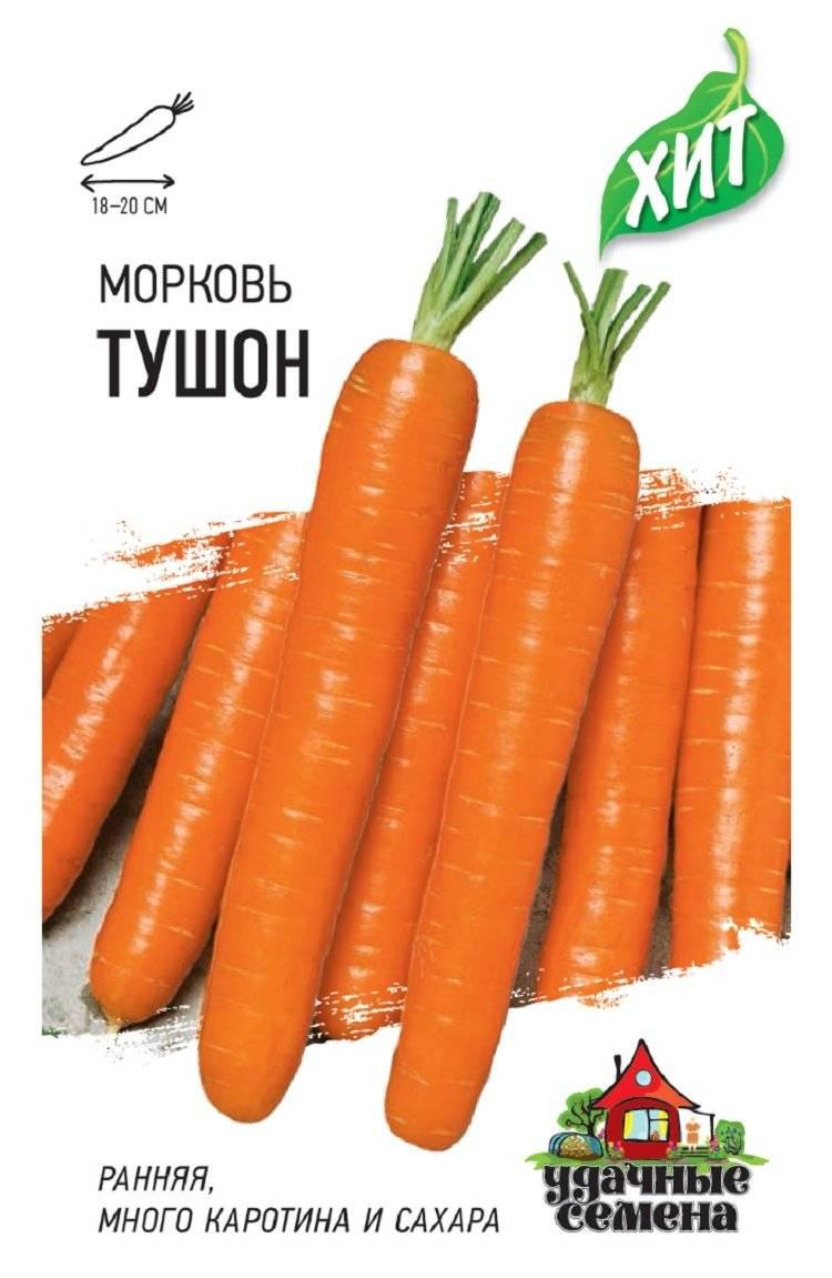 Раннеспелая морковь сорта «тушон»: описание, выращивание и отзывы
