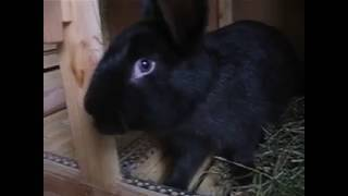 Можно ли давать кроликам одуванчик, в каком виде, и в каких количествах